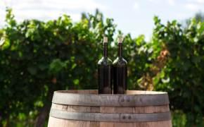 포도로 만드는데… 채식주의자를 위한 와인은 따로 있다?