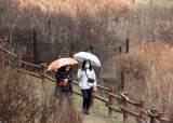하루 걸러 하루 비 내린다…봄비 잦은 이유는?