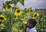 [더오래]탄자니아 소년과 해바라기, 수많은 사진서 건진 한 컷
