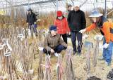 봄은 됐지만 '꽃보다 코로나'···식목행사·꽃축제 줄줄이 취소