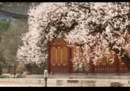봄꽃 활짝 덕수궁, 구름 가득 백록담 '눈호강' 즐기세요