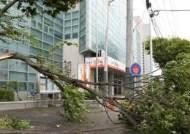 전국 강풍주의보…오후 태풍급 바람, 선별진료소 피해 우려