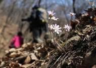 [서소문사진관] 빼앗긴 봄에도 꽃은 피었다. '활짝 핀 청계산 야생화'