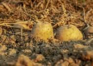 [더오래]귀농인의 득템 '치유농업'…돈도 벌고 힐링도