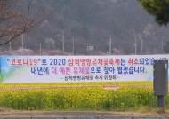진해 이어 강릉 '벚꽃 엔딩'···삼척도 유채꽃밭 가는 길 막았다
