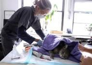"""설마 우리집 고양이가 코로나 감염원? """"아직까진 근거 없다"""""""
