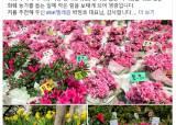 """고동진 사장, 꽃다발 릴레이 동참…""""꽃의 힘 빌려 마음의 거리 좁히자"""""""