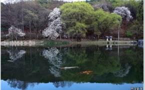 [조용철의 마음 풍경] 봄은 왔는데