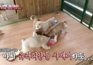 """""""유러피안 사재기하듯""""...SBS 'TV 동물농장' 조롱 자막 사과"""