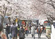 봄꽃에 무너진 2m 거리두기…일부 교회 여전히 현장예배