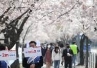 벚꽃만개·부활절·클럽번개…이번주 코로나 최대 고비가 온다