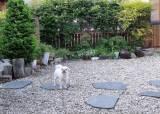 [더오래]귀엽고 착한 우리 강아지가 무지개 다리 건넌다니…