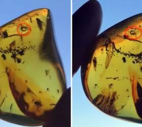 [<!HS>한컷플러스<!HE>+] 3000만년 전 물 ·공기 품은 호박 발견돼
