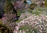 꽃 대궐 수목원, 계곡 청량한 휴양림…나를 부르는 봄날의 숲들