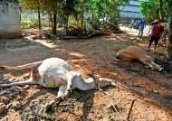 LG화학 인도 공장 가스유출 사망자 1명 늘어…12명 사망