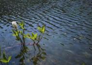 [권혁재 핸드폰사진관]폰카로 Dslr급 사진찍기 '아주 특별한 꽃' 조름나물 꽃