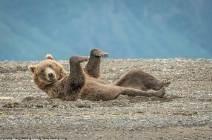 [서소문사진관] 춤추는 회색곰, 권투하는 사자들... 미소를 부르는 '코미디 야생 사진상' 작품들