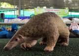 '코로나 숙주' 박쥐·천산갑 등 야생동물, 수입 제한 강화키로