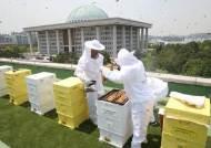 국회서 꿀벌 90만마리 산다…수확한 꿀 코로나 의료진 등에