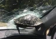 고속도로 주행중에 날벼락···앞유리에 거북이 날아와 박혔다