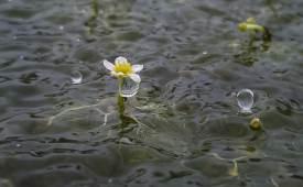 가장 슬픈 운명의 꽃 논에서 피는 매화마름