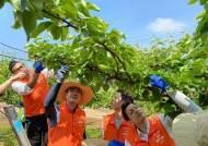 중앙그룹 임직원, 일손 부족해진 농가 찾아 봉사활동 펼쳐