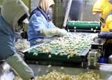 과잉생산이 되레 기회…국산마늘 미국·대만 본격 수출길