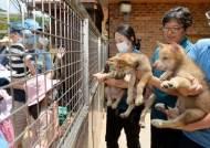 대전 동물원(오월드), 한국늑대 새끼 6마리 오는 6일 공개