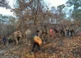 [소년중앙] '천적' 인간에게서 '공생' 희망을 찾는 코끼리