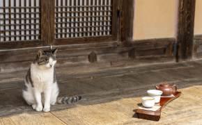 고양이 사는 툇마루서 차 한잔···인스타 '사진 맛집' 뜨는 옛집