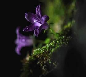 [백종현의 여기 어디?] 역병 불렀다는 '킹덤'의 생사초, 양재동 꽃시장에 널려 있다?