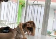 '오뚜기 회장 장녀' 함연지, 핫팬츠 입고 늘씬 각선미 자랑 '