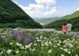 겨울엔 흰눈, 여름엔 흰꽃… 해발 1300m 산에 들인 인공 낙원