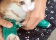 """""""할퀴어서 훈육하려고""""…새끼고양이 다리에 청테이프 감은 20대 검거"""