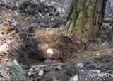 [더오래]죽은 소나무 뿌리 근처에 많아…미백에 좋은 이약재