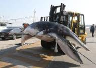 작살 던져 밍크고래 불법포획한 일당 4명 구속, 도주자 추적
