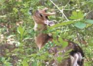 [사진] 현충원에 나타난 꽃사슴