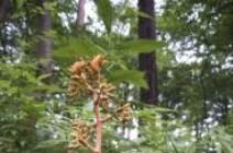 [권혁재 핸드폰사진관] 으름난초가 멸종위기에 처한 이유?