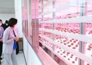 1만2000명 먹을 무농약 채소, 12층 아파트형 농장서 자란다