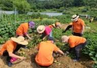 밭 매고 감자 캐고 장아찌 담그고…농사로 치매 치료 효과 쑥쑥