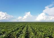 포스코인터, '핵심사업' 곡물거래 전문가 연이어 배출