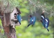 [한 컷] 행운의 상징 파랑새의 육아