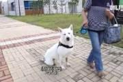 장애견에 '뒷다리 파업' 조롱…선 넘은 동물 유튜브들