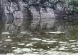 세계 가장 오래된 울산 고래, 2주째 '물고문' 당하고 있다