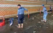 여의도 지하차도에 물고기 100마리 헐떡…긴박했던 구출작전