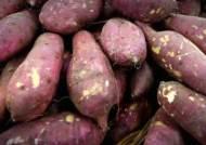 고구마보다 열량 더 낮은데…다이어트 땐 감자 안 되는 이유