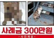 독살, 화상, 목졸려···한달 고양이 4마리 죽었다, 부산 무슨일