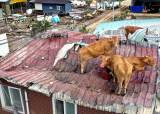 [사진] 물폭탄에 … 지붕 위 피신한 소