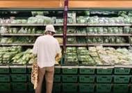 최장 장마에 배추ㆍ무 가격 80% 이상 급등