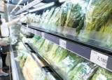 장마로 가격 오른 채소 사면 할인…농산물 가격 안정화 대책